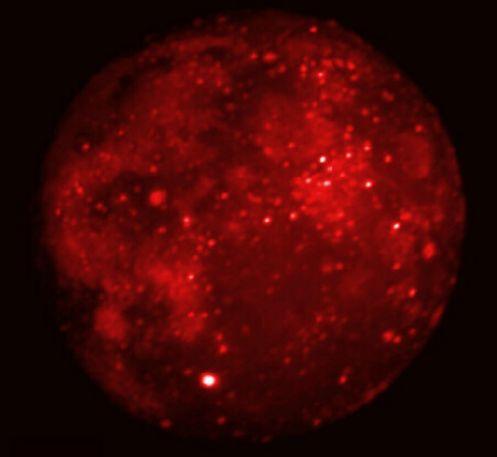 La eclipse de Luna visto en la banda infrarroja