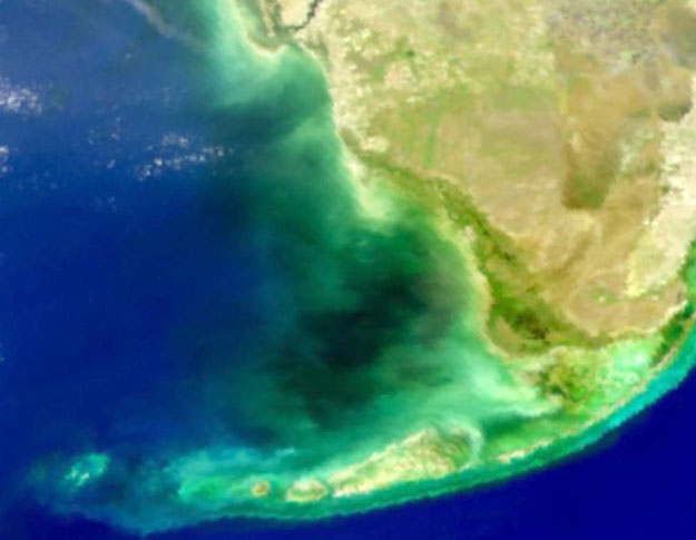 Misteriosa agua negra en la Bahía de Florida