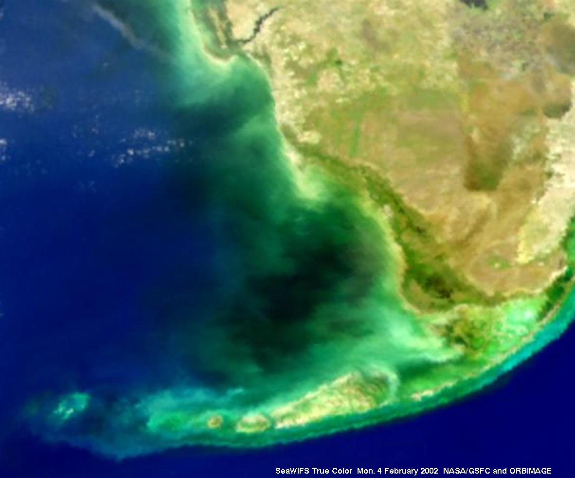 Apod 2002 April 2 - Mysterious Black Water In Florida Bay-1421