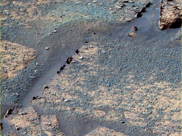 Razorbacks en el Cráter Endurance