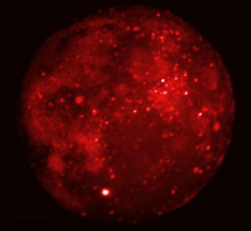 Luna eclipsada por infrarrojos