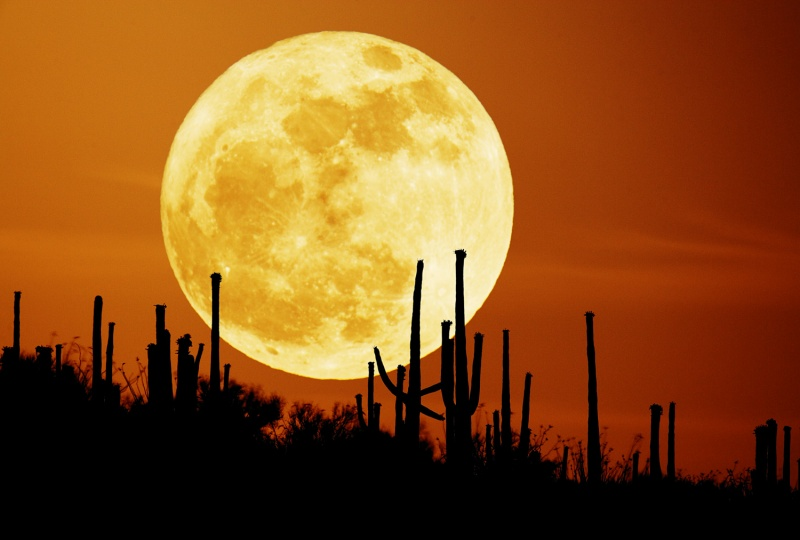 La luna de Saguaro