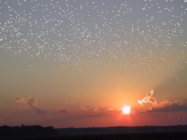 Un rebaño de estrellas