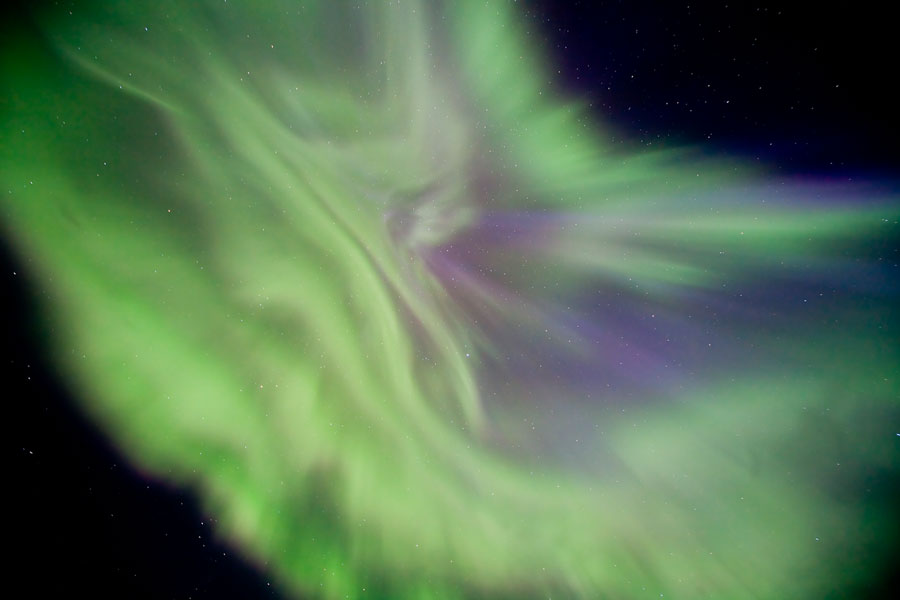 Una corona auroral floral