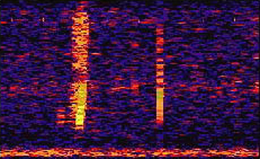 El Bloop: un misterioso sonido del profundo océano