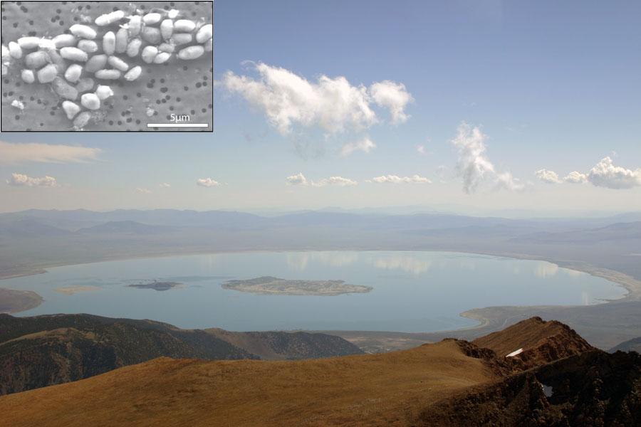 Mono Lake: hogar del extraño microbio GFAJ-1
