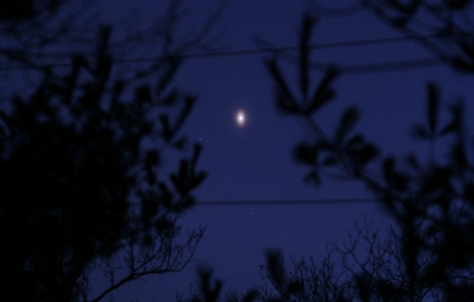 Un insólito Venus ovalado