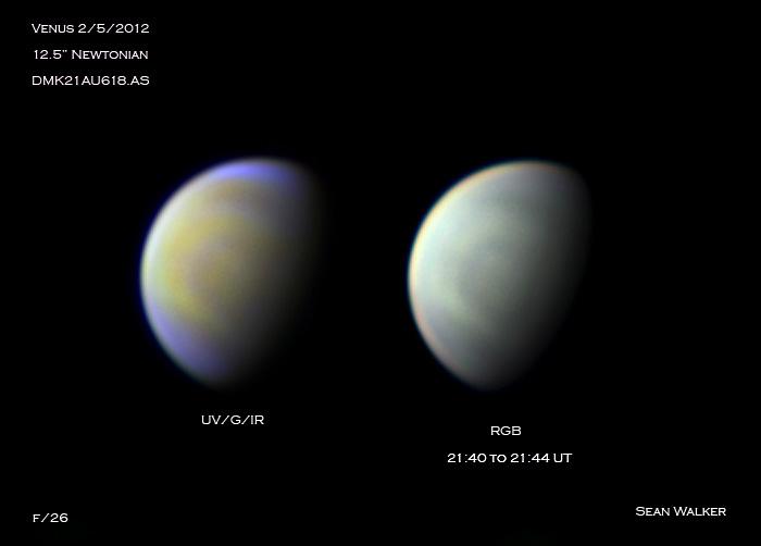 Venus multicolor