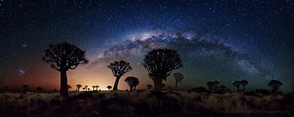 La Vía Láctea sobre el bosque de árboles Carcaj