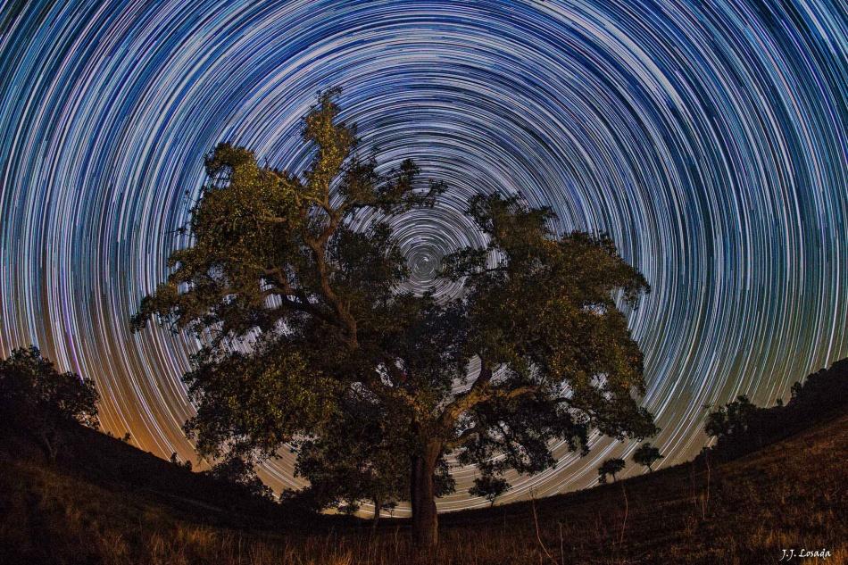 El árbol del norte celeste