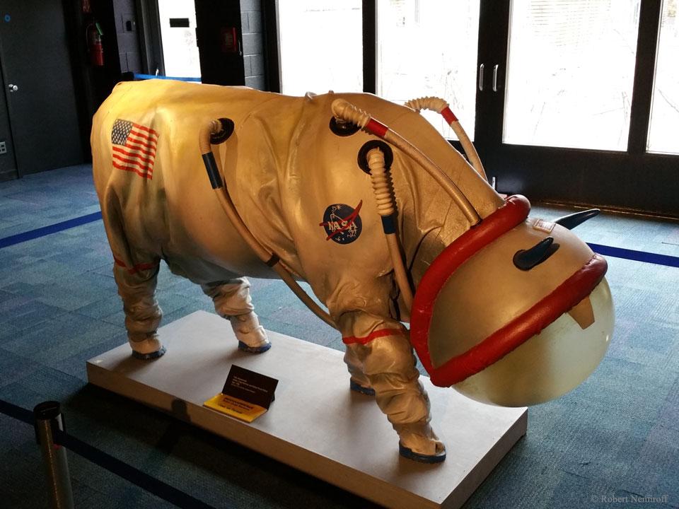 cow astronaut - photo #35