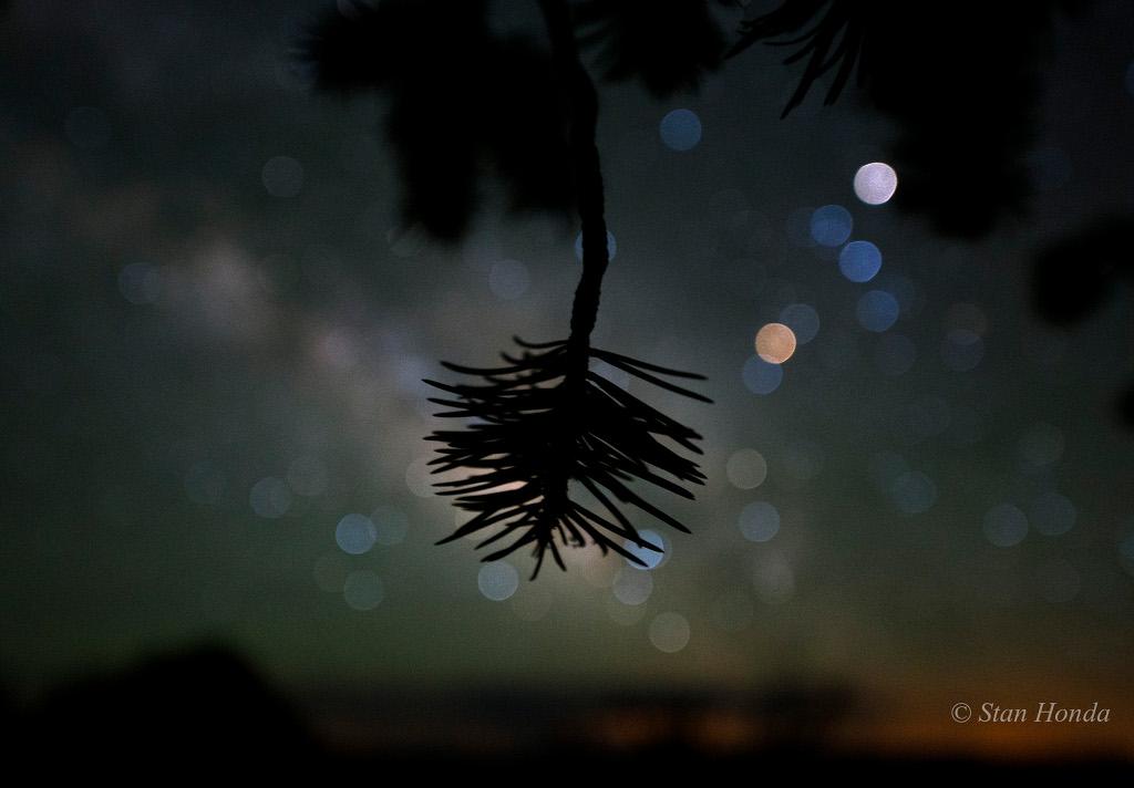 Colores de estrellas y pino piñonero