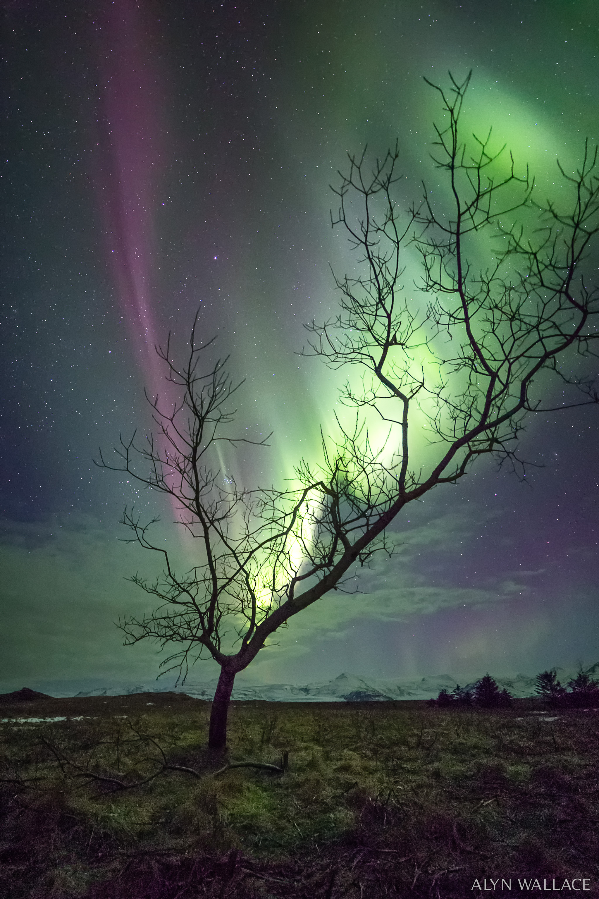 apod 2017 march 20 the aurora tree
