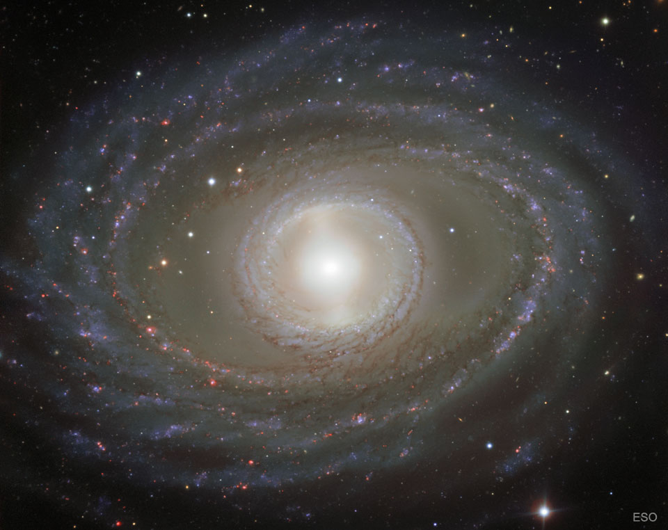 Ribbons and Pearls of Spiral Galaxy NGC 1398