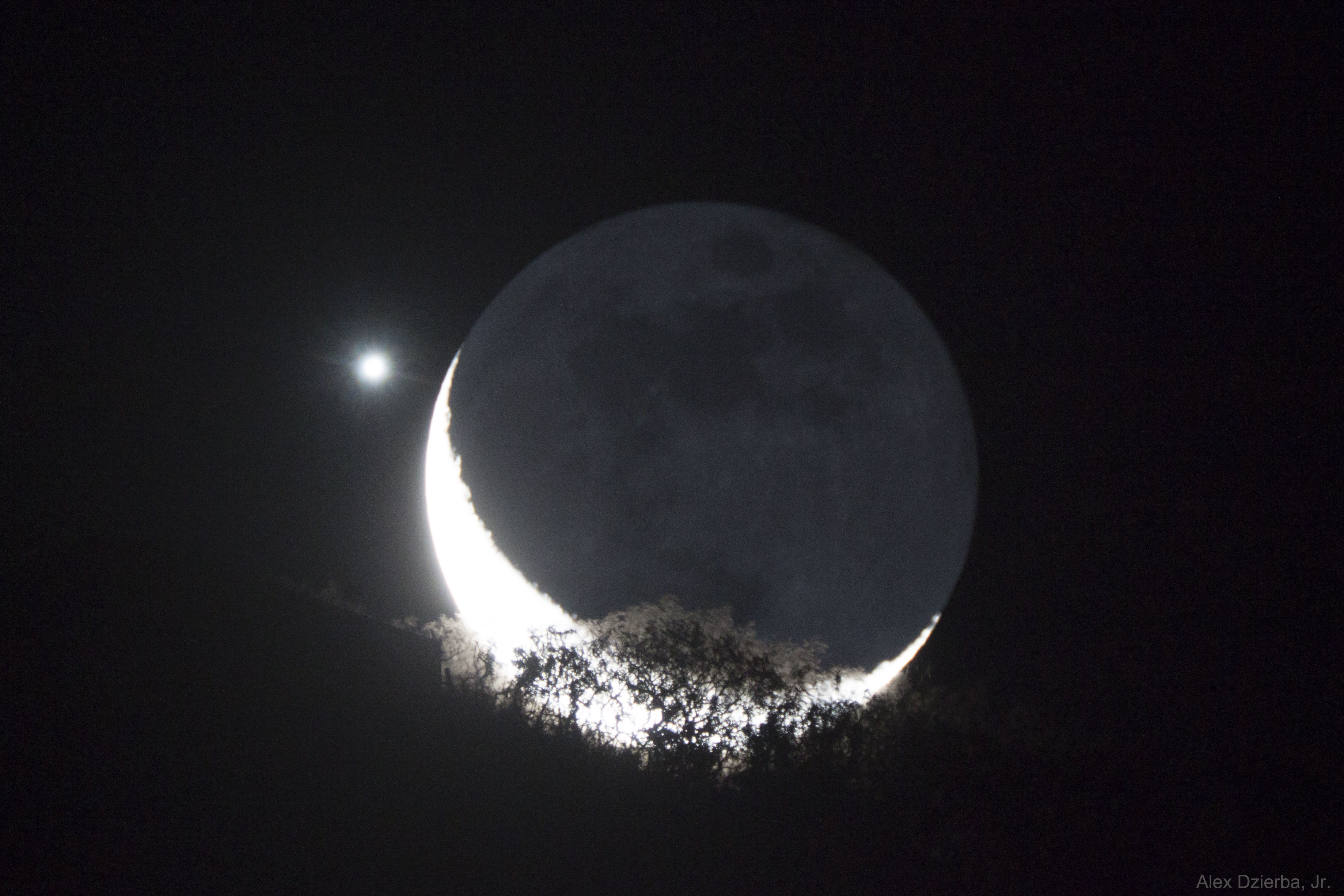 [ASTRONOMIA]   Moon and Venus Appulse over a Tree