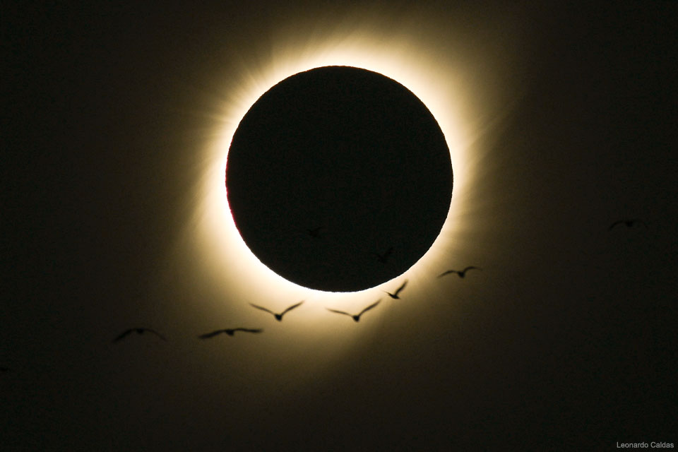 Aves en un eclipse solar total