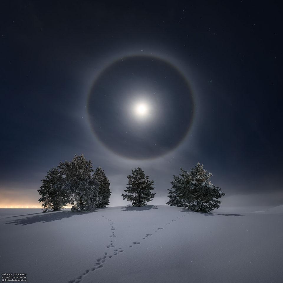 Lunární halo nad zasněženými stromy