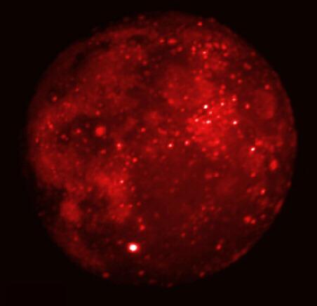 Luna eclipsada en infrarrojos