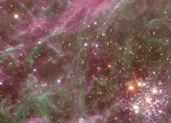 Habitante de la Nebulosa de la Tarántula